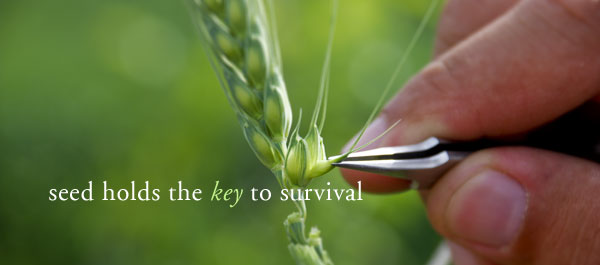 Seed is the key to survival